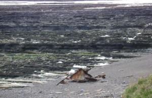 debris near Warebeth